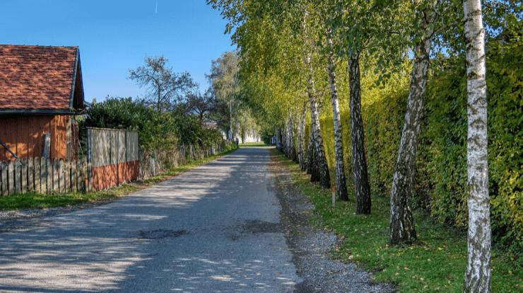 A large hedge